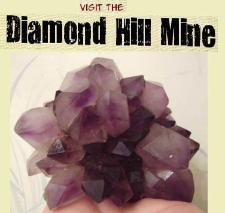Visit the Diamond Hill mine in South Carolina to dig for amethyst & quartz crystals.